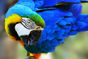 What We Do - Patty's Parrot Palace