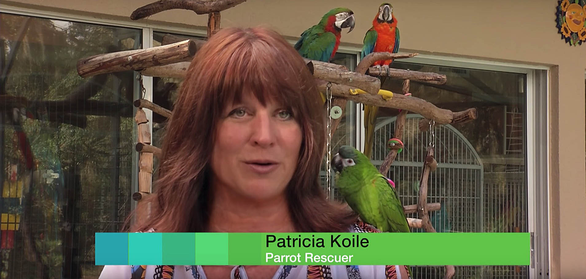 Home - Patty's Parrot Palace